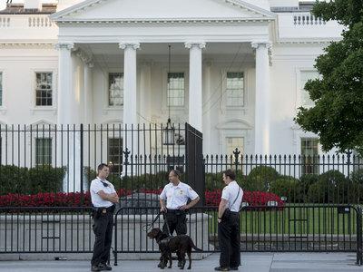 Проникновение злоумышленника в Белый дом предотвратили собаки