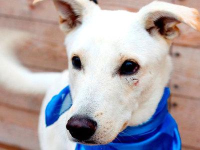 Дареное воскресенье: собаки из приютов ждут помощи