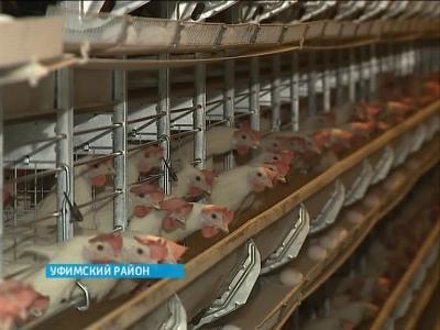 В Башкортостане модернизируют сразу шесть птицефабрик