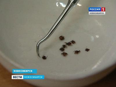 В Сибири разработали экспресс-тест на клещевой энцефалит