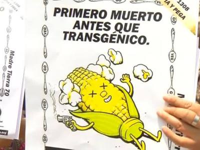 Против ГМО от Monsanto протестует весь мир, но не Украина