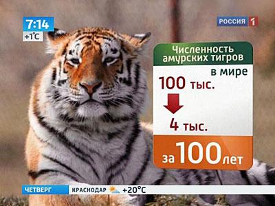 картинки тигр спасибо за внимания для презентации