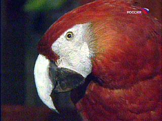 Самый старый в мире попугай