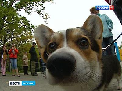 Вести.Ru: Живодёрскую отраву готовят из таблеток от туберкулеза