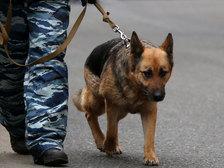 """Телефонные террористы продолжают """"эвакуировать"""" столичные управы"""