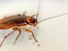 Не только тараканы: десять существ, которые переживут ядерную войну