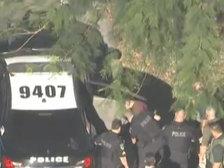 Инцидент во Флориде: в Сети появилось видео задержания предполагаемого стрелка