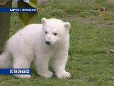 Нового обитателя Берлинского зоопарка теперь могут увидеть все желающие