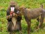 Мужчина назвался Тарзаном и попытался пролезть в обезьянник