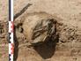 На севере Египта обнаружены уникальные артефакты эпохи неолита
