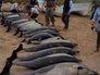 Полсотни дельфинов выбросились на берег в Мексике