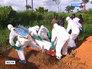 Вспышка чумы в Африке убивает человека в течение суток