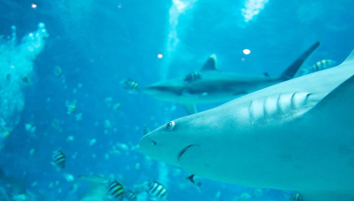 мультфильм египетские акулы фото контакт гостями